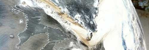 vespa2.jpg